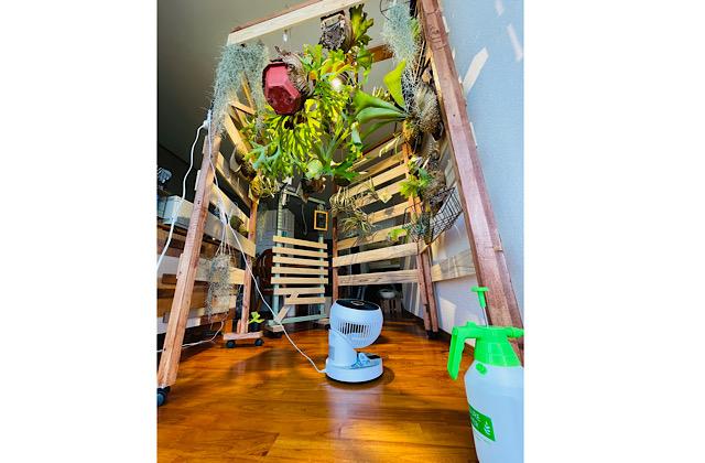 植物ウォール