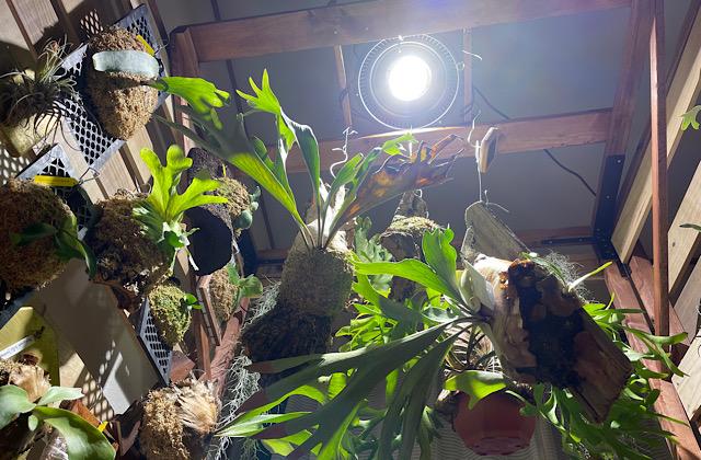 植物用ライト